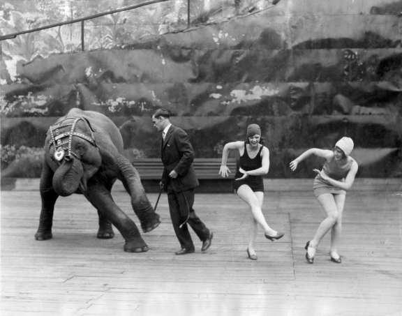Enseñando a bailar el charlestón a un elefante. Nueva York, 1926.