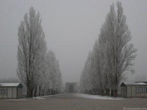 Explanada sobre la que se levantó el campo de Dachau. A uno y otro lado de las hileras de cipreses estaban los barracones.