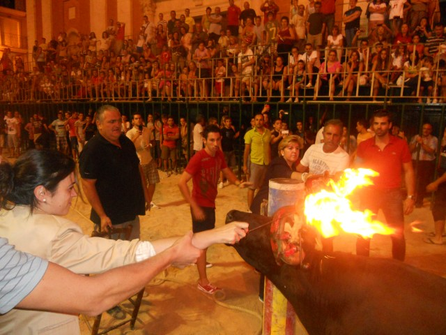 Encendido de las astas de un toro durante el 'Bou embolat' de Turís (Valencia) en agosto de este año.